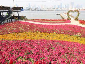 สวนดอกกระเจ้า
